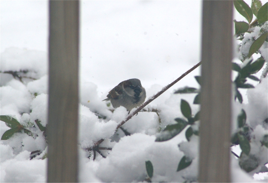 Cold little bird