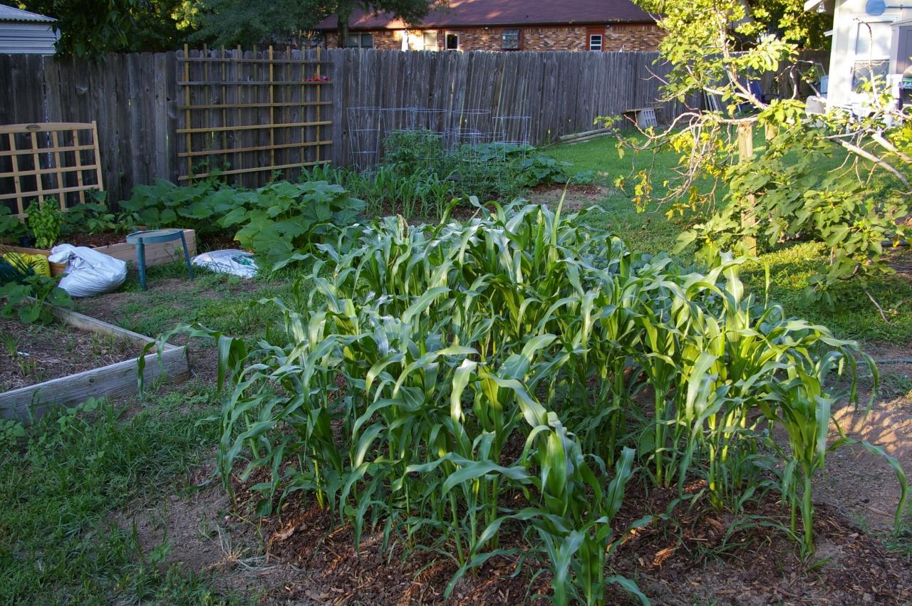 corn, 06/30/2011