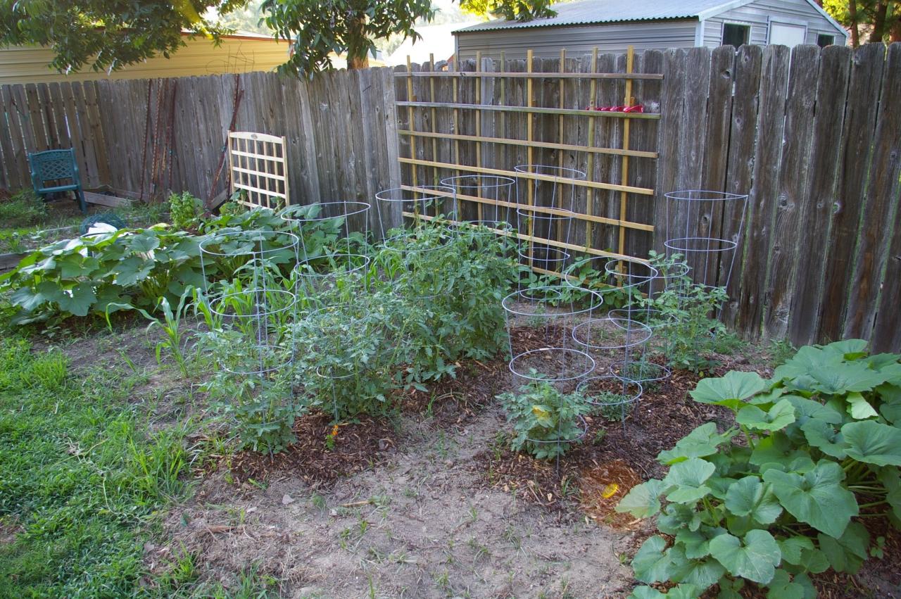 vegetable garden, 06/30/2011